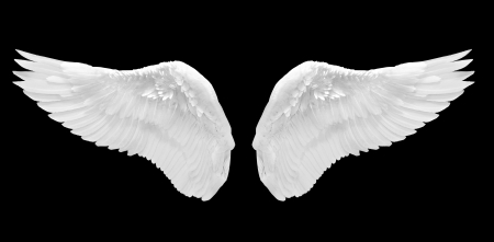 wings angel: white angel wing isolated