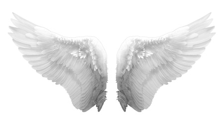 eagle wing: white angel wing isolated