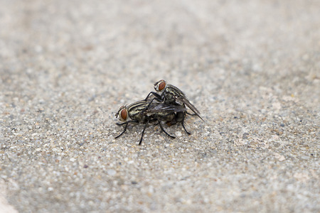 fucking: The flies are breeding Fucking flies