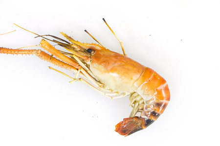 prepared shrimp: river prawn grilled isolated on white background