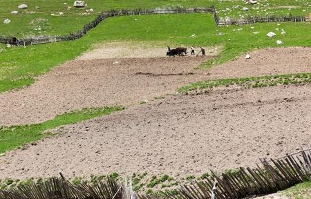 Traditional Georgian farming. Ushguli Village. Upper Svaneti. Georgia. Stock Photo