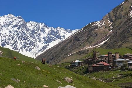 dry cow: Ushguli - the highest inhabited village in Europe. Upper Svaneti. Georgia.