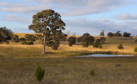 A rural landscape  Country New South Wales  Australia photo