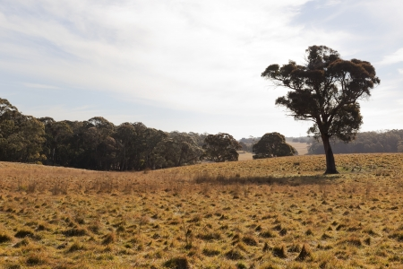 A rural landscape  Tablelands near Oberon  New South Wales  Australia Stock Photo - 13752386