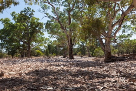 pozo de agua: Cauce seco. Flinders Ranges (cerca de Iga Warta). Australia del Sur. Foto de archivo
