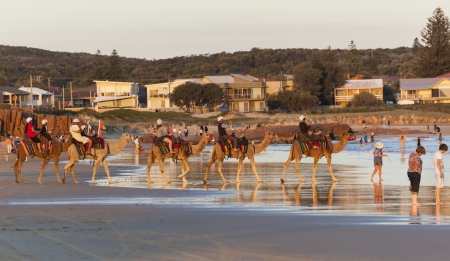 Camels on Stockton Beach  Port Stephens  Anna Bay  Australia  Stock Photo