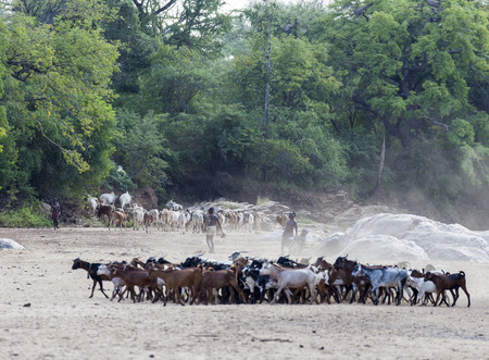 TURMI, OMO VALLEY, ETHIOPIA - DECEMBER 30, 2013: Unidentified Hamar shepherds with their herd in a dry river bed.