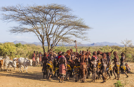 TURMI, OMO VALLEY, ETHIOPIA - DECEMBER 30, 2013: Unidentified group of Hamar women dance at bull jumping ceremony. Jumping of the bull is a rite of passage into manhood in some Omo Valley tribes.