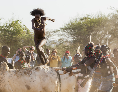 initiation: TURMI, OMO VALLEY, ETHIOPIA - DECEMBER 30, 2013: Unidentified young man jumps of the bulls.  Bull Jumping ceremony is a rite of passage into manhood in some Omo Valley tribes.