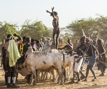 rite: TURMI, OMO VALLEY, ETHIOPIA - DECEMBER 30, 2013: Unidentified young man jumps of the bulls.  Bull Jumping ceremony is a rite of passage into manhood in some Omo Valley tribes.