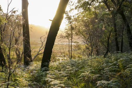 nsw: Bushwalking in Booderee National Park. Jarvis Bay. NSW. Australia