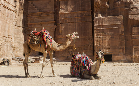 of petra: Camels near Royal tombs. Petra. Jordan.