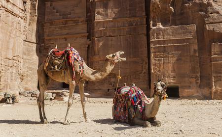 Camels near Royal tombs. Petra. Jordan.