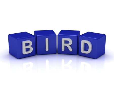 BIRD word on blue cubes on an isolated white background Stock Photo - 15185414