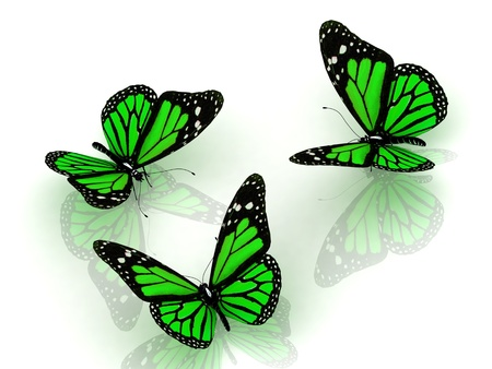 antennae: 3D Three beautiful green butterfly discussing something on white background