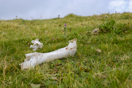 bone remnants lying in open air on the grass Stock Photo
