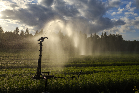 Crop spraying with a water cannon sprinkler ensures a proper distribution of water Stock Photo