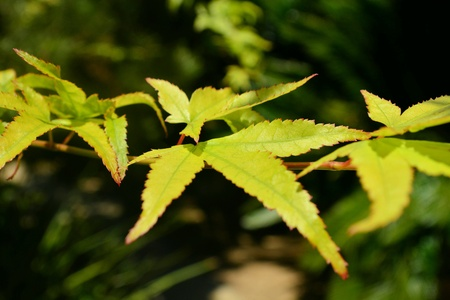 bright: Bright Green Leaves on Branch
