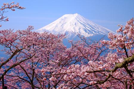 Mt Fuji et Cherry Blossom au Japon Spring Season (japonais Appel Sakura) Banque d'images