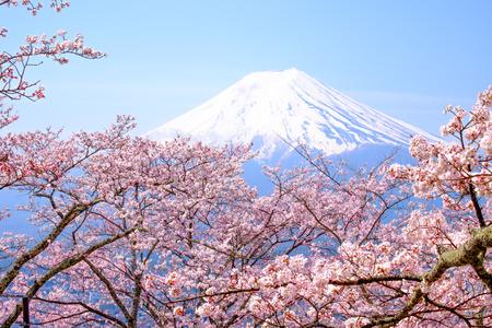 富士山と日本の春シーズン (日本語 Call 桜) の桜 写真素材