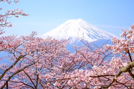 Mt Fuji and Cherry Blossom  in Japan Spring Season (Japanese Call Sakura )