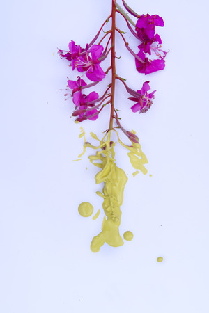 Purple Flower Dipped in Yellow Paint Stock Photo