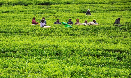 NUWARA ELIYA, SRI LANKA - May 26, 2012:  Women from Sri Lanka rest in tea plantation.