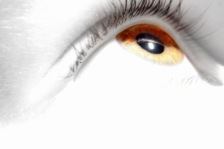 eyelid: Eye   Stock Photo