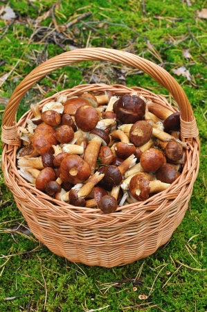 Basket full of mushrooms in forest
