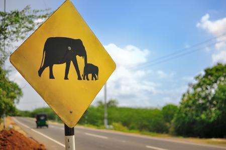 sri lanka: Road Sign  Caution Elephants