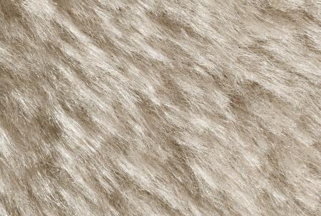 White fur background  photo