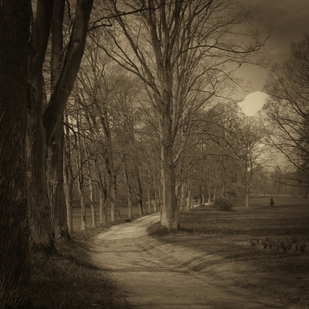 Path in the woods, Vintage style. photo