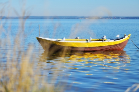 Empty boat with seagulls. photo