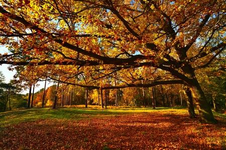 hojas antiguas: �rbol de oto�o en el parque.