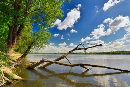 polska: Wild bank of the river Vistula in Poland.