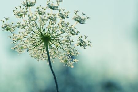 azul turqueza: Flor. Estilo vintage. Foto de archivo