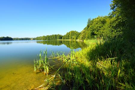 arbol de pino: Lago con el bosque en la costa.