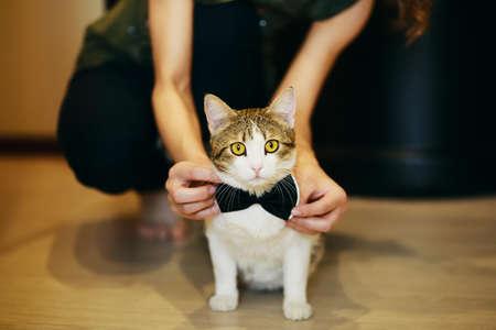 lazo negro: Gato que desgasta los novios corbata de lazo negro en la boda Foto de archivo
