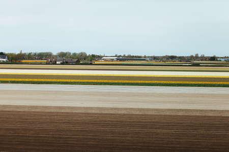 farm field: Farm field after cultivation