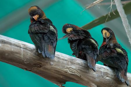 birds on branch: Three black birds on a branch