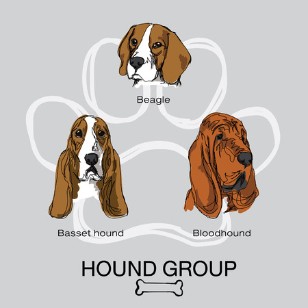 hound: dog hound group Illustration