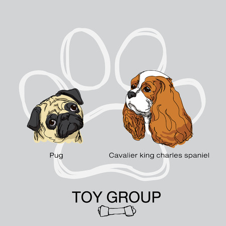 cavalier king charles spaniel: dog toy group Illustration