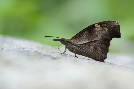butterfly in closeup shot  photo
