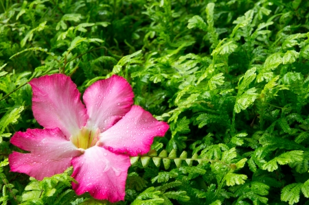 Pink flower on green background