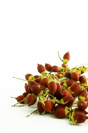 Red betel nut on white background photo