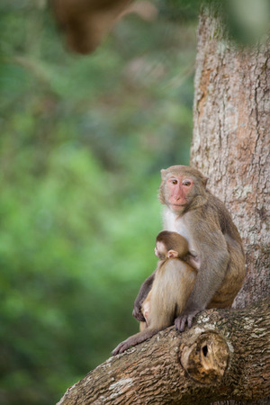 conglomeration: monkey on a tree branch  Stock Photo