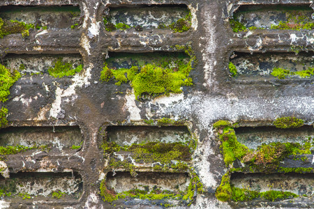 fissure: old wall with moss