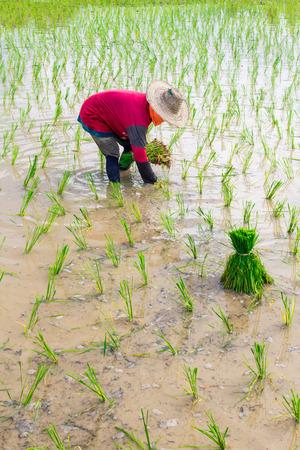 farm duties: farmer Stock Photo