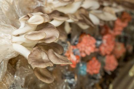 mushroom house: mushroom house