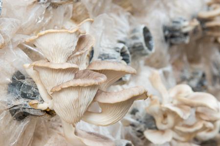 colonization: mushroom house
